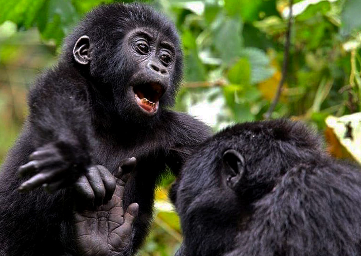 9-days-rwanda-goirlla-tracking-adventutre-safari