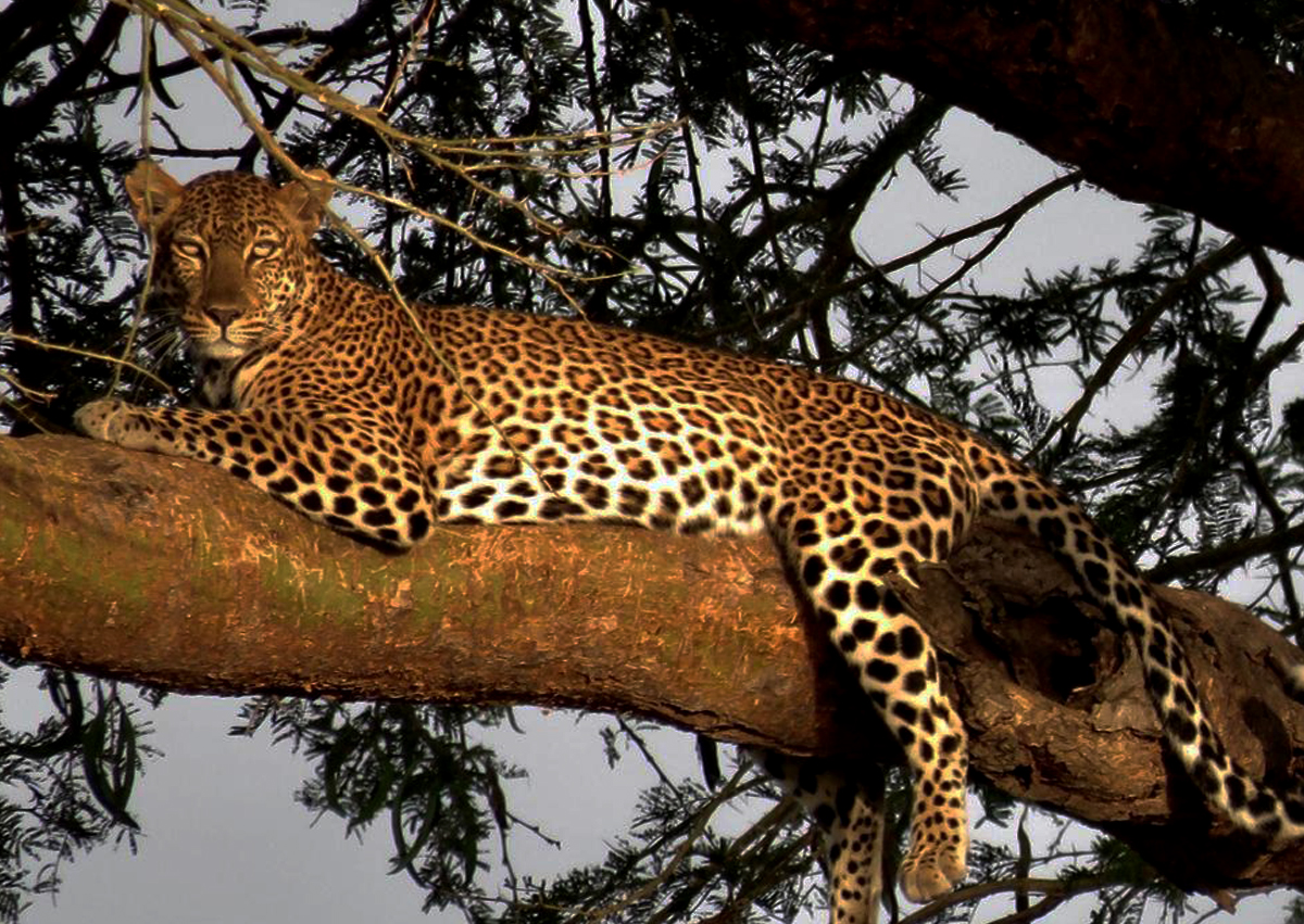 12 Days Uganda Gorillas, Chimps and Wildlife Safari - Get to African Wildlife