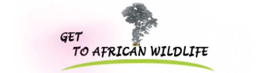 Get to African Wildlife safaris